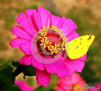 Butterfly rest