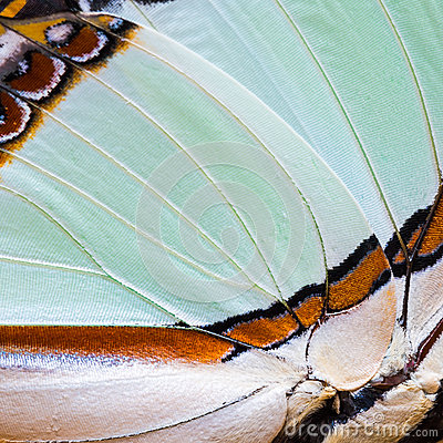 Free Butterfly S Wing Texture Stock Images - 44655214