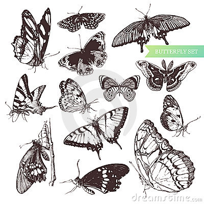 Free Butterfly Set. Royalty Free Stock Image - 22936146