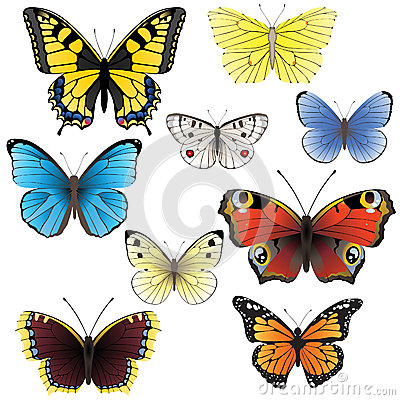 Free Butterfly Set Stock Photography - 26250752