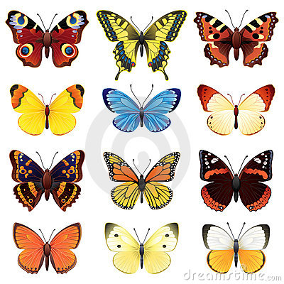 Free Butterfly Set Stock Images - 8845434