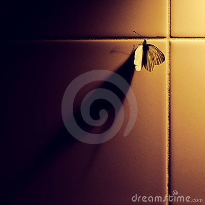 Butterfly and shadow