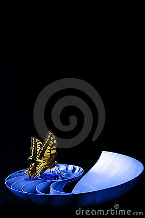 Butterfly on a shell
