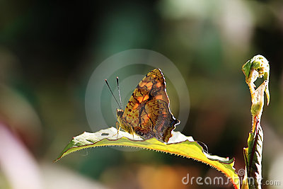 Butterfly sit on green leaf