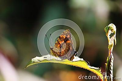 Butterfly sit on green leaf