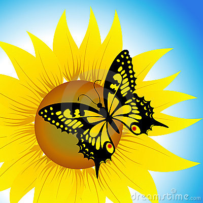 Butterfly sitting on sunflower