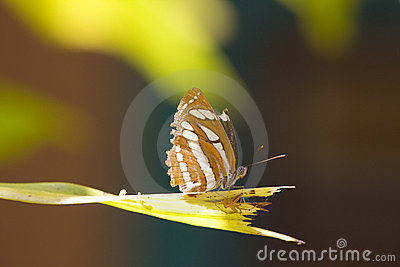 Butterfly and a Spider