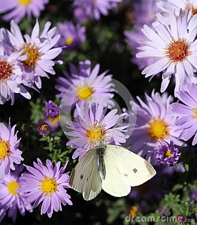 Butterfly on spring flower nature background