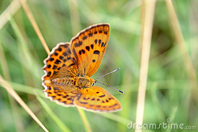 Butterfly on a spring meadow.