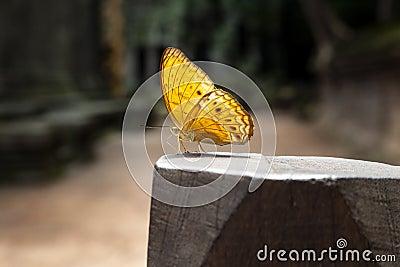 Butterfly standing on wood pillar Stock Photo