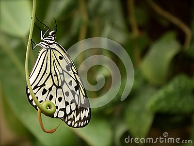 Butterfly on Stem