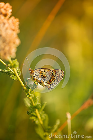 Butterfly on summer flower