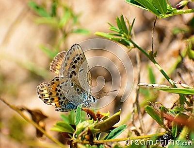 Butterfly sun bathing