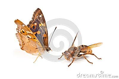 Butterfly swallowtail