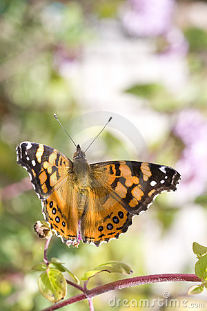 Free Butterfly Taking Flight Royalty Free Stock Photos - 5898778