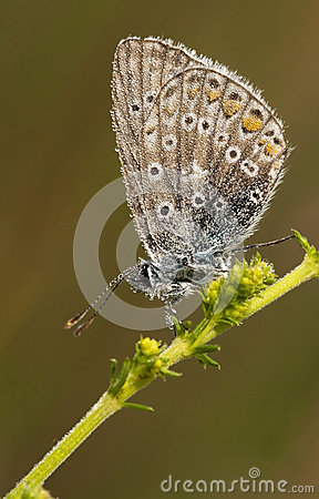 Butterfly with tiny waterdrops