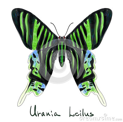 Butterfly Urania Leilus. Watercolor imitation.