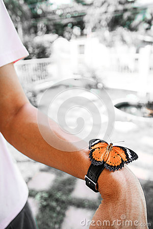 Butterfly watch Stock Photo