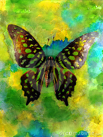 Free Butterfly Watercolor Photo Royalty Free Stock Images - 94849