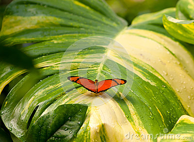 Butterfly on wet leaf