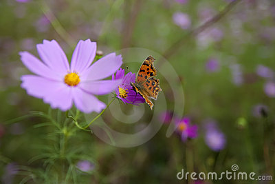 Butterfly and wild flower