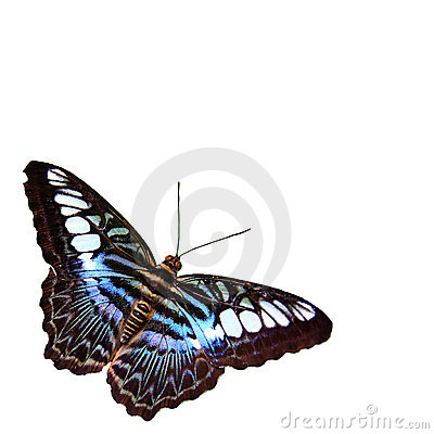 Free Butterfly With White Background Royalty Free Stock Photos - 14607908