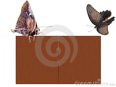 Butterfly wooden texture blank