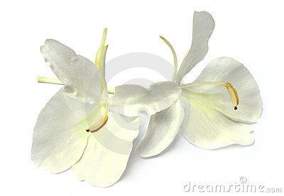 Butterflylily or Dolanchapa flower of Southeast As