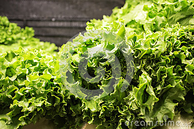 Butterhead lettuce at market