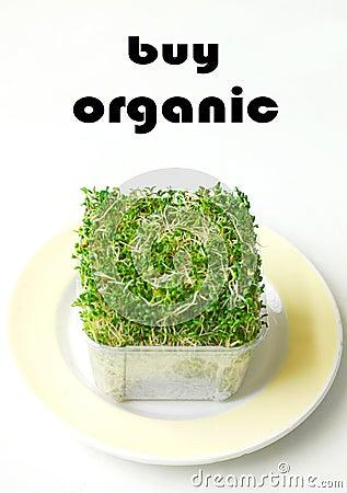 Buy Organic products alfalfa
