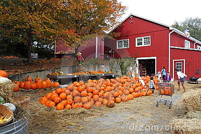 Pumpkin Sales Editorial Photo