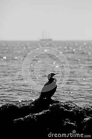 Bw seascape