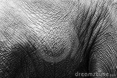 BW texture of elephant