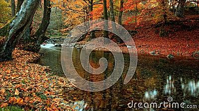 Byala reka 1