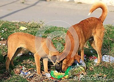 Cães com fome