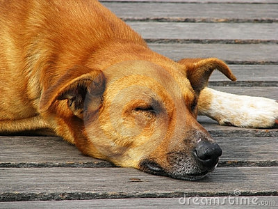 Cão 2 da rua
