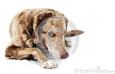 Cão bonito mas tímido