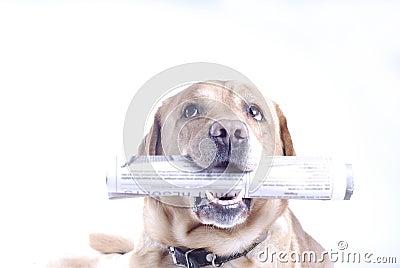 Cão com um jornal