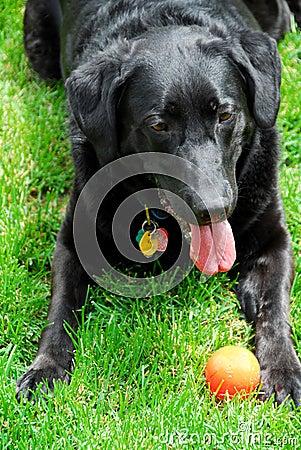 Cão com uma esfera