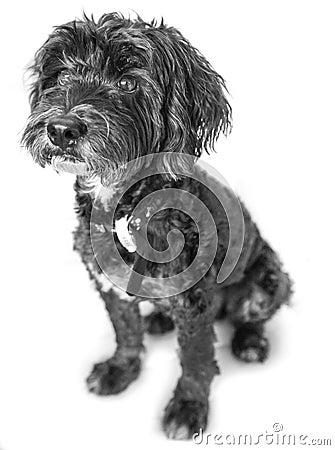 Cão de animal de estimação bonito