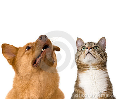 Cão e gato que olham acima