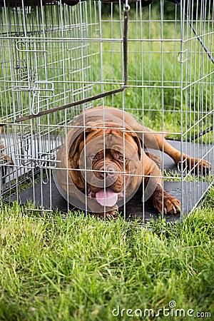 Cão em uma gaiola