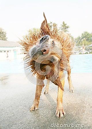 Cão molhado