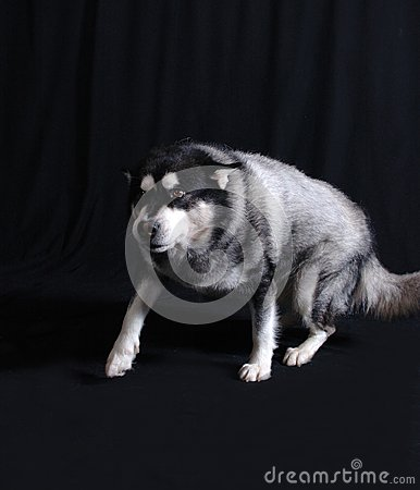 Cão espreitar