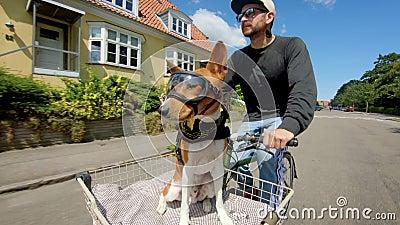 Cãozinho bonito em óculos no cesto de bicicleta video estoque