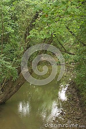 Córrego com árvore de inclinação