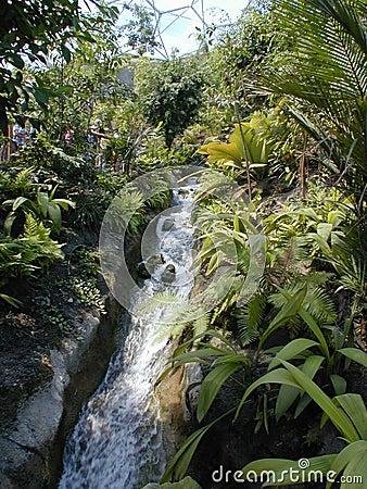 Córrego em um bioma 2
