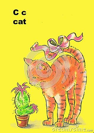 C- cat