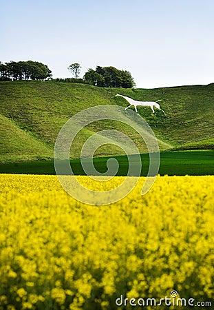 Caballo Blanco De Cherhill, Inglaterra