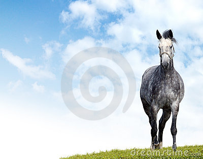 Caballo Dappled-gris